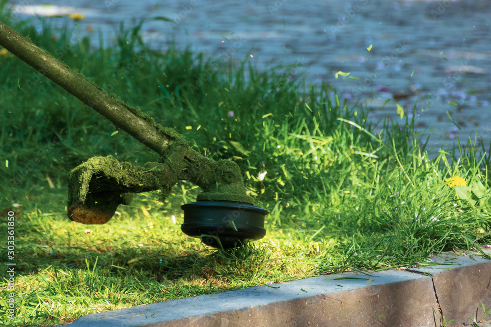 Fototapeta professional grass mowing in the park. green lawn with yellow dandelions. close up shot of gasoline brush cutter head with nylon line trimming fresh green grass to small pieces
