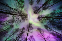 Aurora Borealis Corona Above Forest Trees