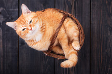 Red Domestic Cat In A Basket O...