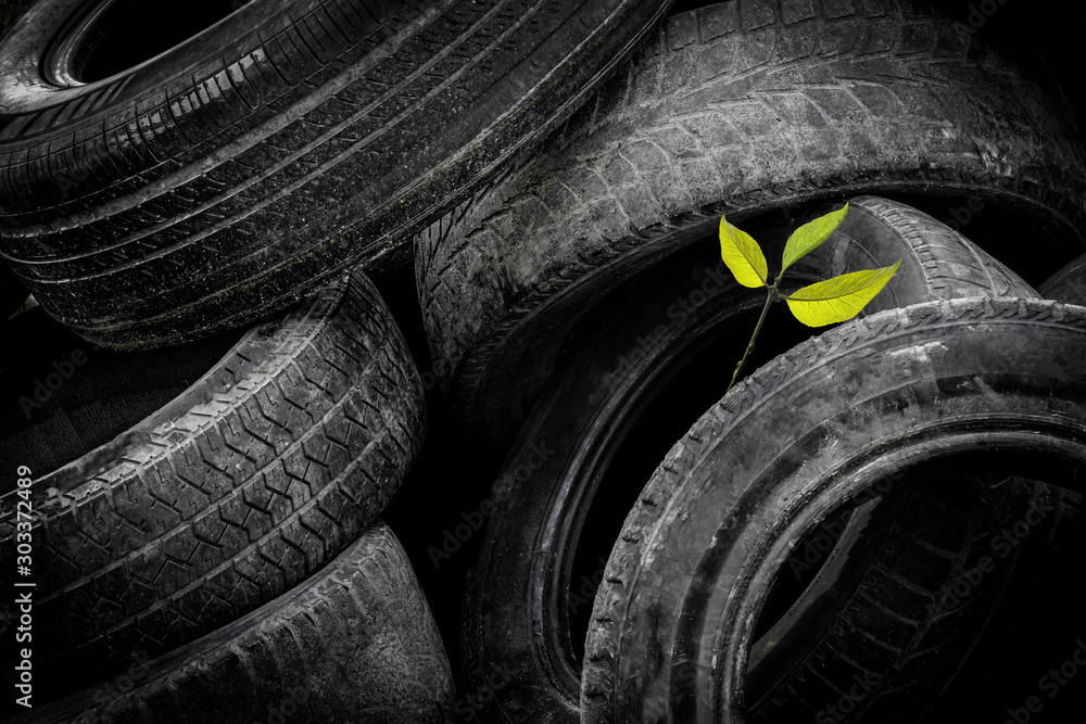 Fototapety, obrazy: A young green tree makes its way through a bunch of old car tires. A bunch of old tires from used cars. Environmental pollution.