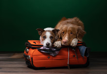 Two Dogs Help Get Ready For A ...