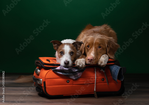 Photo two dogs help get ready for a trip