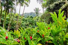 Ho'omaluhia Botanical Garden...