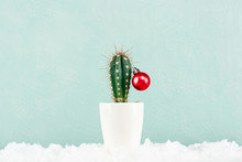 Funny Cristmas Cactus Decorated With Red Christmas Ball With Snow