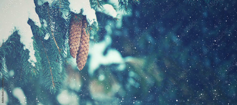 Fototapety, obrazy: Winter Fir Branches and Pine Cones Covered With Falling Snowflakes, Horizontal