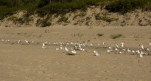 Sea Birds Sitting On A Beach