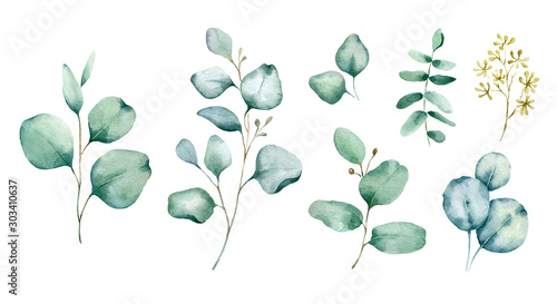 Fototapeta Watercolor hand painted botanical illustration. The branches and leaves of blue eucalyptus .Tropical elements isolated on white background for design in greenery .style. obraz na płótnie
