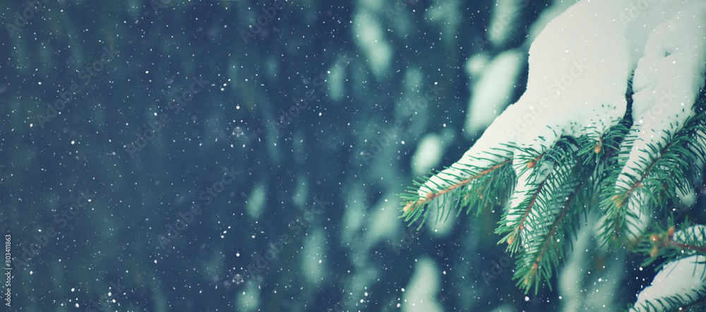 Fototapety, obrazy: Winter Season Holiday Evergreen Christmas Tree Pine Branches Covered With Snow and Falling Snowflakes, Horizontal