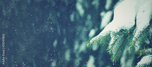 Winter Season Holiday Evergreen Christmas Tree Pine Branches Covered With Snow and Falling Snowflakes, Horizontal