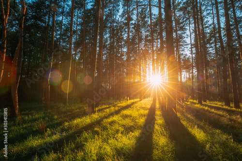 Foto Sunset Sunrise Sun Sunshine In Sunny Summer Coniferous Forest