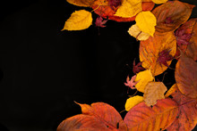 Mixed Autumn Leaves On A Black Background