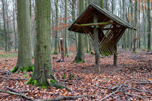 Wooden Empty Feeding Rack Standing In The Forest. Feeding Place For Wild Game.