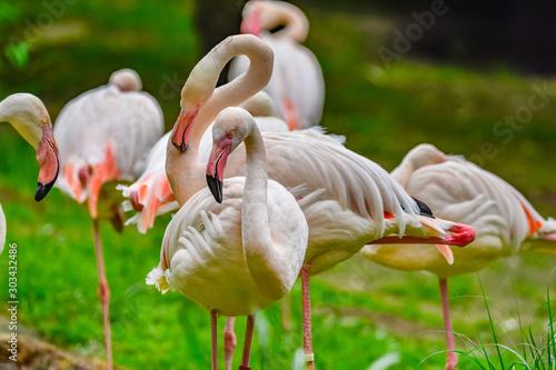 Foto auf Leinwand Flamingo flamingos in zoo