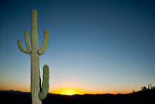 A Saguaro Cactus With Sky In T...