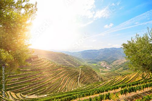 Obraz Vineyards with red wine grapes for Port wine production in winery near Douro valley and Duero river, Peso da Regua, Porto Portugal - fototapety do salonu