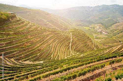 Fototapeta Vineyards with red wine grapes for Port wine production in winery near Douro valley and Duero river, Peso da Regua, Porto Portugal obraz