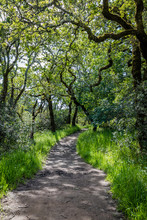 Twisty Oak Branches Create Shade On A Dirt Path Between Lush Spring Grass In A Forest
