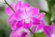 canvas print picture - closeup of beautiful orchid flower