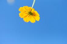 Yellow Flower On Blue Sky