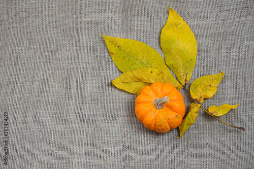 A bright orange mini- pumpkin rests alongside yellow leaves in autumn on a burlap background