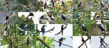 13 Hornbill In Thailand Are He...