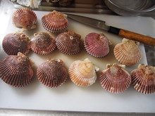 How To Cook Raw Scallops