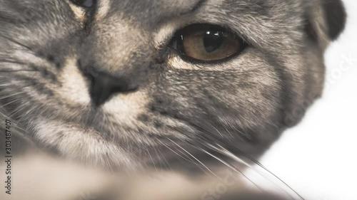 Pinturas sobre lienzo  Striped gray cat is playing lying