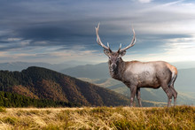 Deer On Mountain Background In...