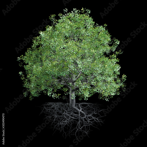 tree with roots, isolated on black background