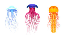 Set Of Colorful Jellyfish. Vec...