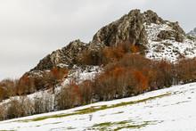 Praderas Con Nieve, Hayedo En ...