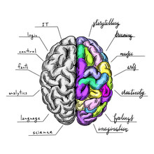 Brain Semispheres With Caption...