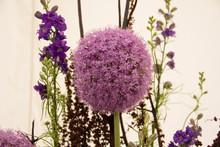 Large Purple Allium Flowers Fo...