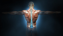 Back Muscles Of A Man With Spi...