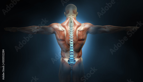 Back muscles of a man with spine, medically 3D illustration Tablou Canvas