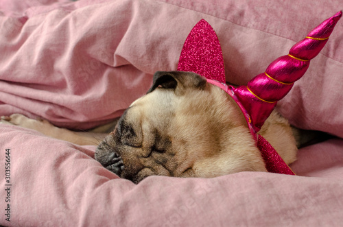 dog breed pug in unicorn hat sleeeping in master's bad Canvas