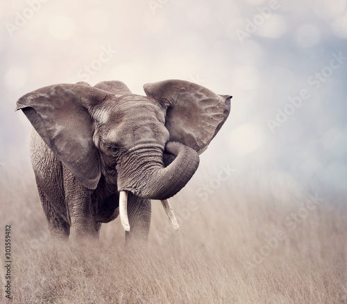 Tuinposter Olifant African Elephant in the grassland