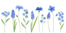 Watercolor Wild Field Blue Flo...