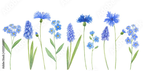 Watercolor wild field blue flowers isolated on white background - muscari, cornflower, forget-me Wallpaper Mural
