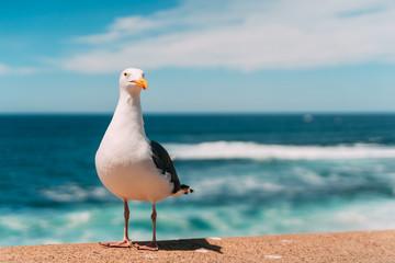 galeb na plaži