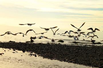 Fototapeta Ptaki Möwen beim Strandstart