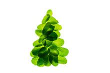 Fresh Green Mint Leaves As Chr...
