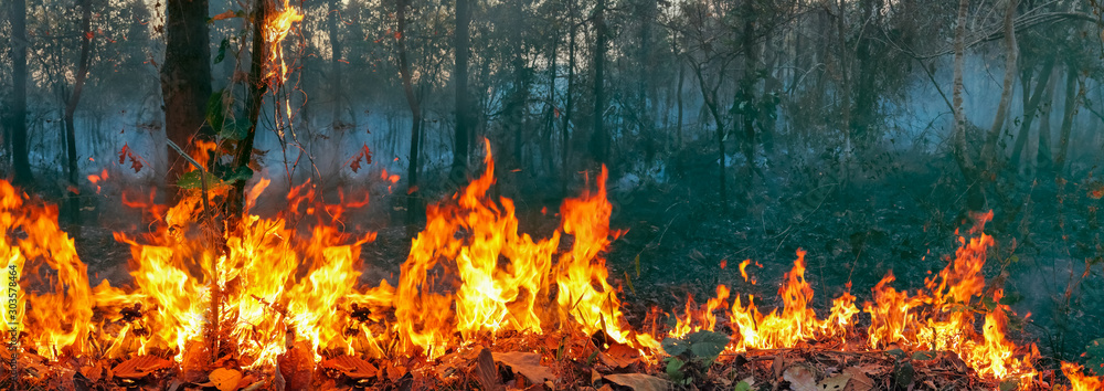Fototapety, obrazy: Australia bushfires, The fire is fueled by wind and heat.