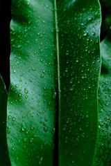 Rain drop on the fern leaf very fresh after rain.