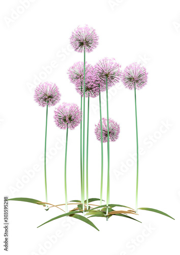 3D Rendering Allium Flowers on White Wallpaper Mural