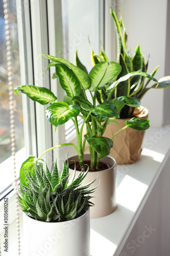 Fotografía  Different potted plants near window at home