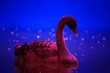 canvas print picture - swan on a background