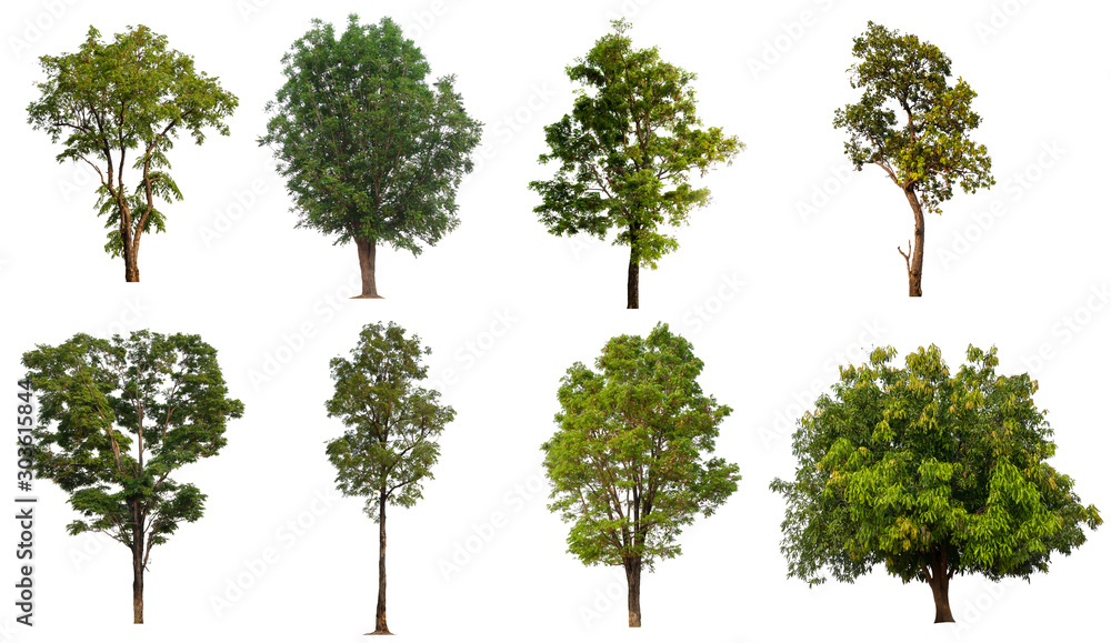 Fototapety, obrazy: collection tree with cut out background