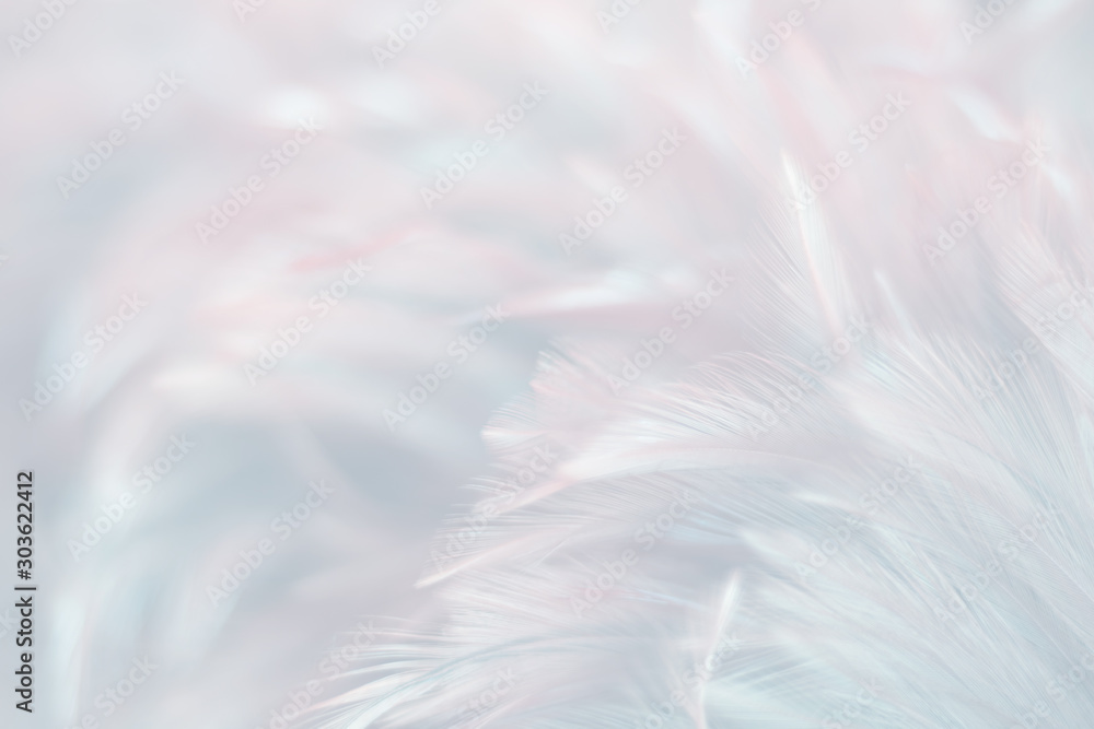 Fototapeta Blur Bird chickens feather texture for background, Fantasy, Abstract, soft color of art design.