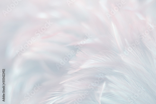 Blur Bird chickens feather texture for background, Fantasy, Abstract, soft color of art design Fototapete